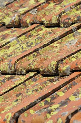 Traitement toiture anti mousse prix Avignon (84) Carpentras Cavaillon